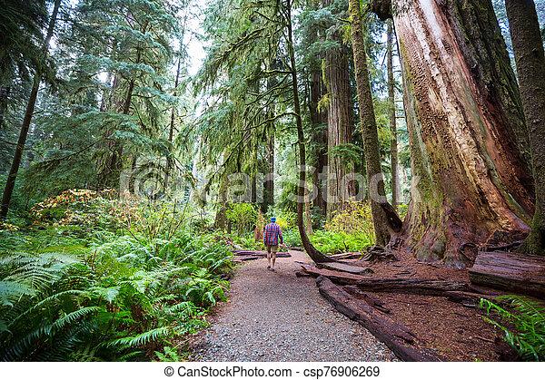 Redwoods - csp76906269