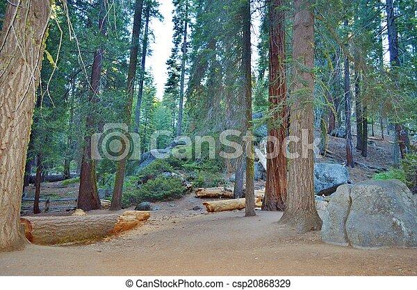 Redwoods - csp20868329