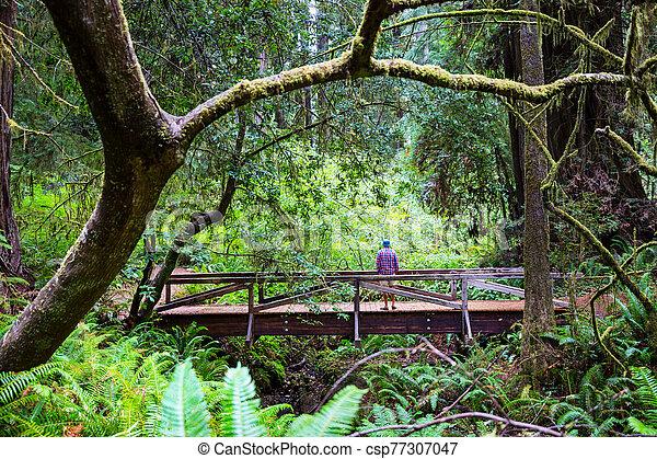 Redwoods - csp77307047