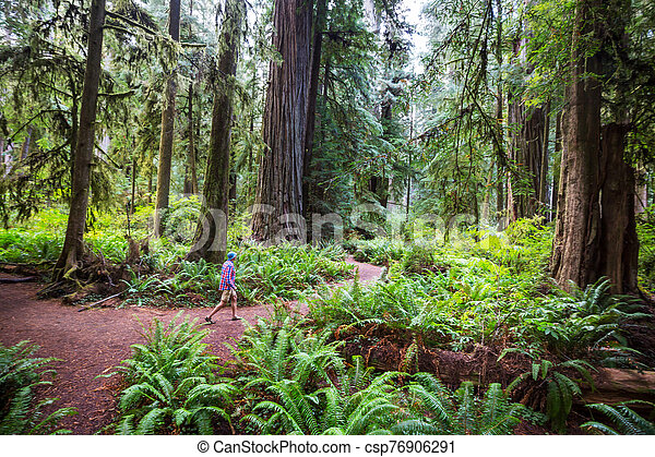 Redwoods - csp76906291