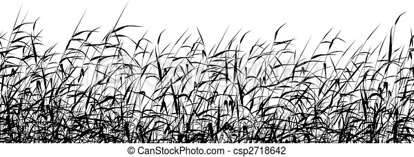 Reed foreground - csp2718642