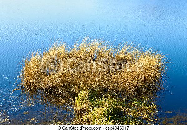Reeded in the reservoir (II) - csp4946917