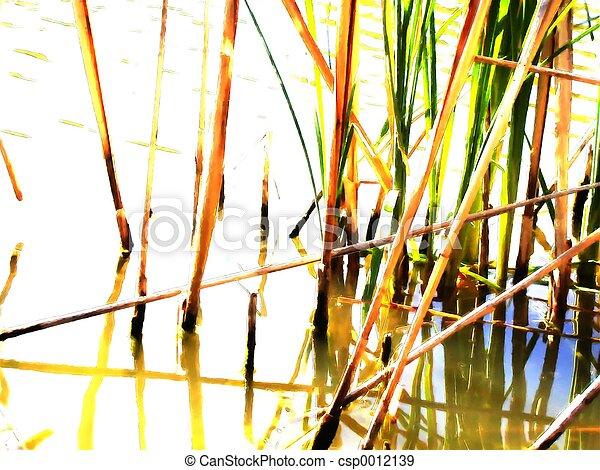 Reeds (1) - csp0012139