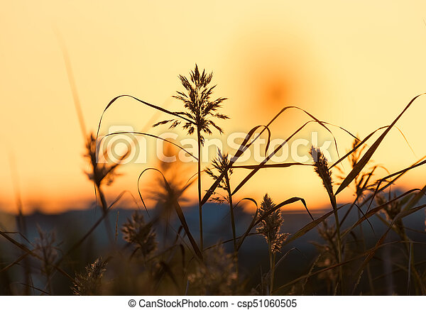 84531d7df5c Reeds at sunset light in helsinki