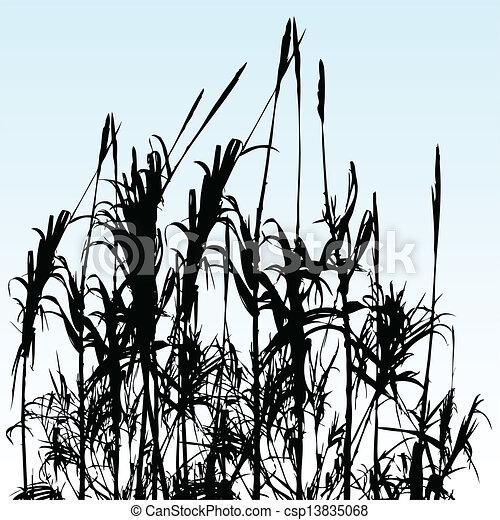 reeds - csp13835068