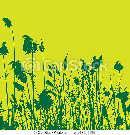 reeds - csp13848258
