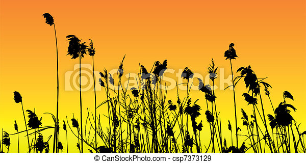 reeds - csp7373129
