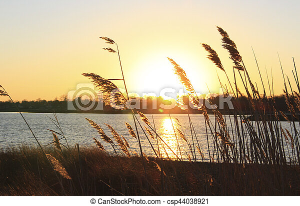 reeds on beach at sunset - csp44038921