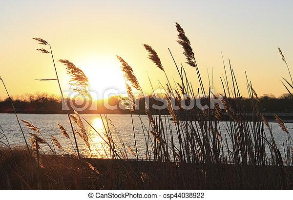 reeds on beach at sunset - csp44038922