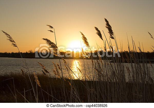 reeds on beach at sunset - csp44038926