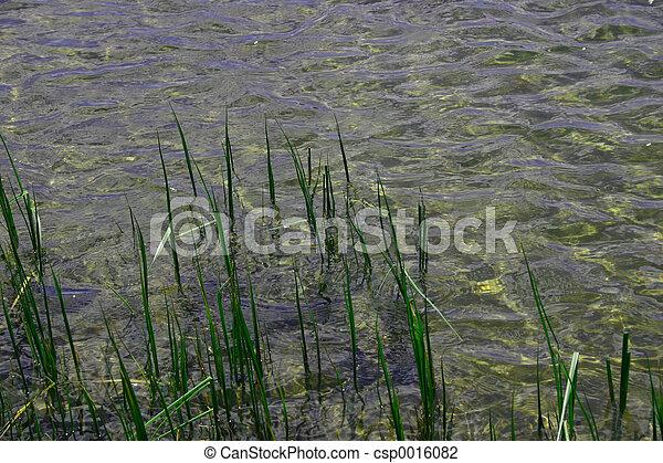 Reeds & Reflections - csp0016082