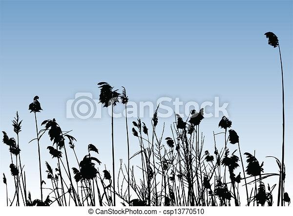 reeds - csp13770510