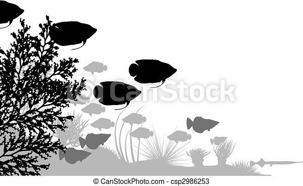 Reef - csp2986253