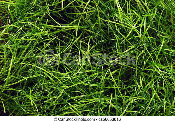 reen grass texture - csp6053816