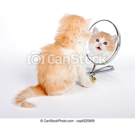 reflété, chaton - csp4225909