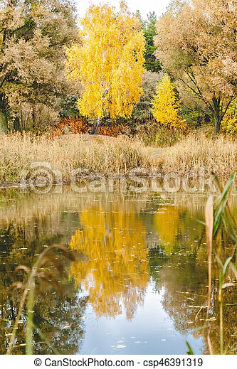 reflected in a forest lake autumn trees - csp46391319