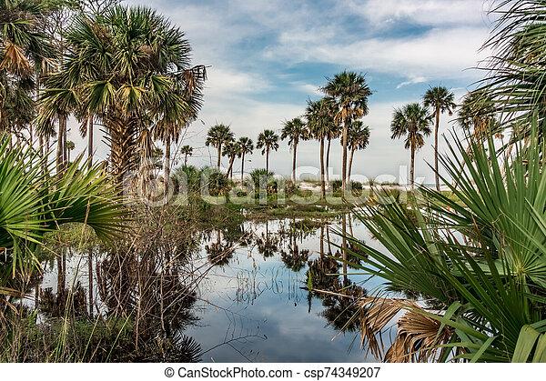 reflections of palm trees on hunting island south carolina - csp74349207
