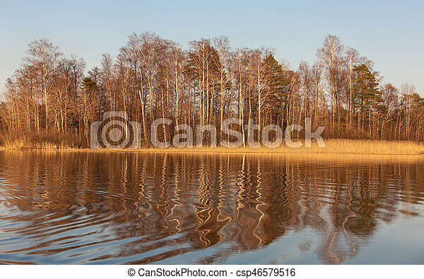 reflections on a forest lake - csp46579516