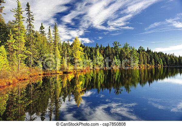 refletir, floresta lago - csp7850808