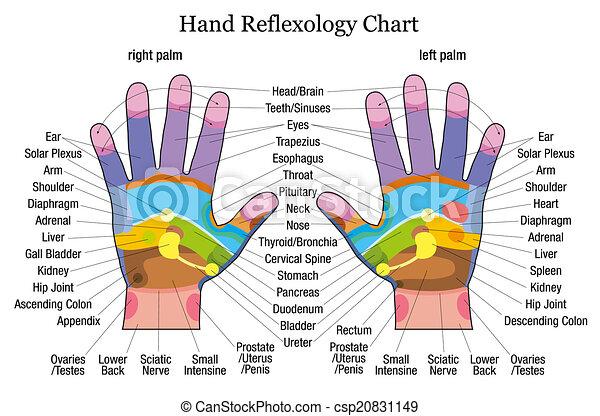 reflexology, hånd, signalement, kort - csp20831149