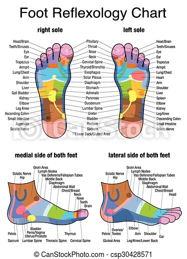 Reflexology plantar sole profile reflex zones of the feet soles reflex zones of the feet soles and side views accurate description of the corresponding internal organs and body parts isolated vector illustration on ccuart Image collections