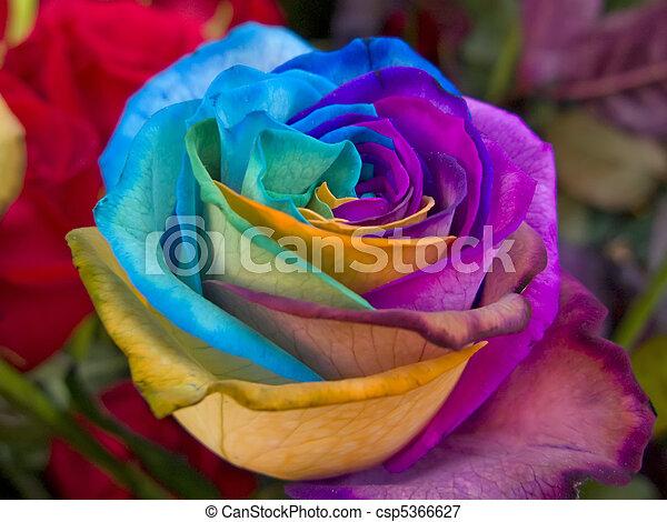 regenbogen rose sehr regenbogen einmalig besondere rose. Black Bedroom Furniture Sets. Home Design Ideas