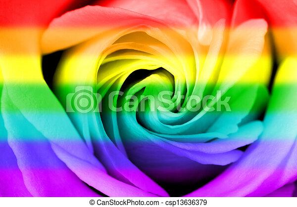 regenboog, vlag, roos - csp13636379