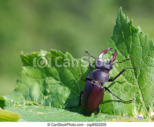 rehbock, lucanus, -, cervus, käfer - csp8922205