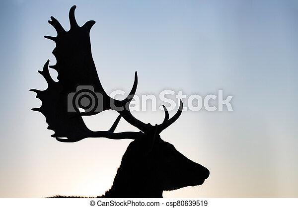 Reindeer in sunset. - csp80639519