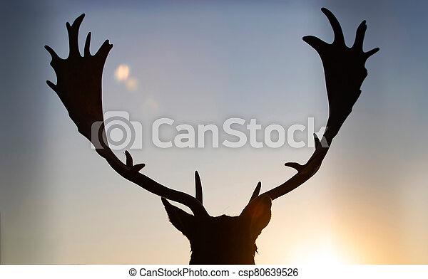 Reindeer in sunset. - csp80639526