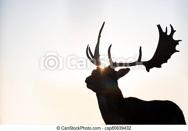 Reindeer in sunset. - csp80639432
