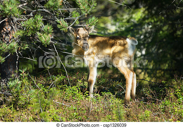 Reindeer - csp1326039