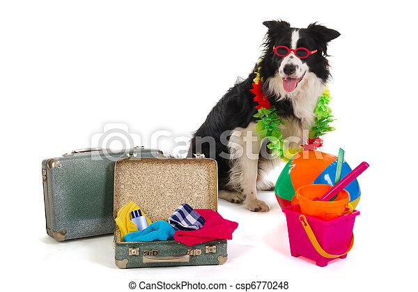 reise, hund - csp6770248