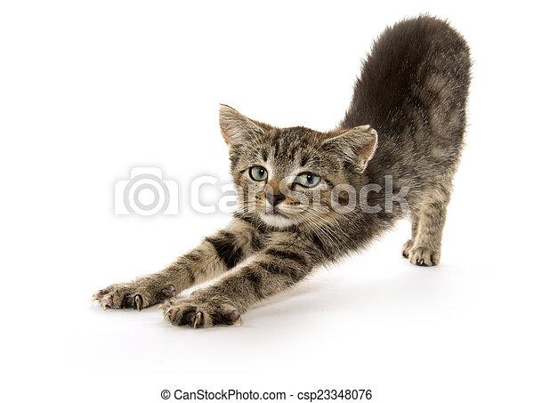 Hübsches Kätzchen - csp23348076