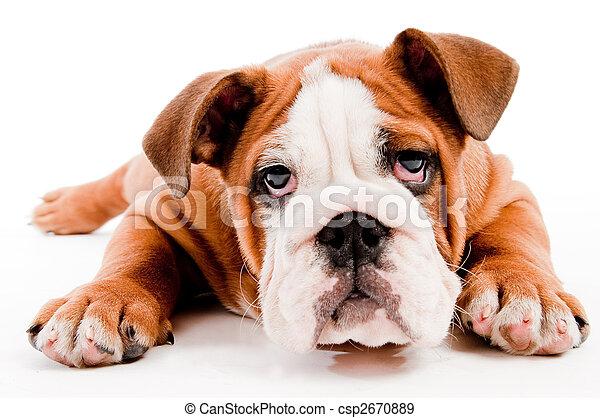 Süßer Hund - csp2670889