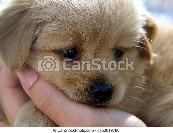 reizend, junger hund - csp0019780