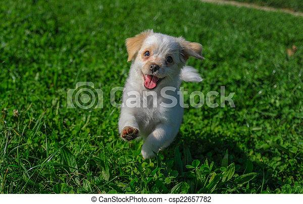 reizend, puppie - csp22657782