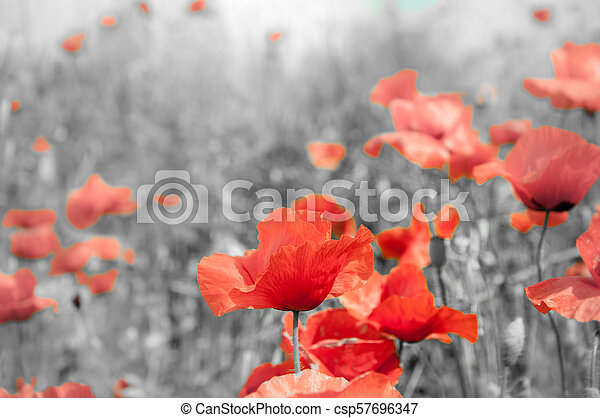Remembrance poppy the remembrance poppy was inspired by the world remembrance poppy csp57696347 mightylinksfo