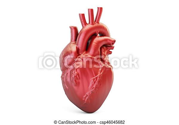 Coeur Humain Photo rendre, coeur humain, 3d. fond, coeur, isolé, rendre, humain, blanc, 3d.