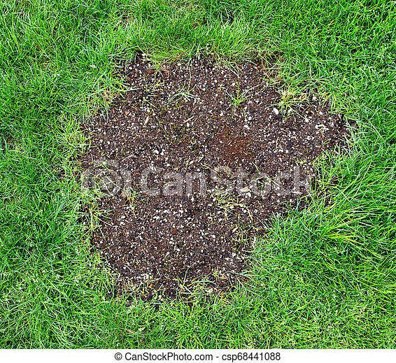 Repair Patch On Natural Grass Lawn Repair Patch On Natural Grass