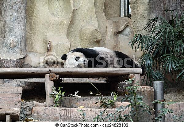 reposer, ours panda - csp24828103