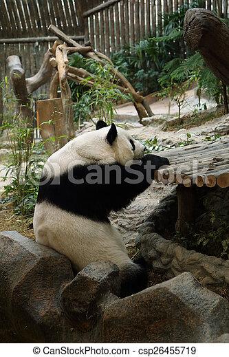 reposer, ours panda - csp26455719