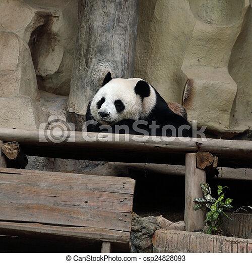 reposer, ours panda - csp24828093