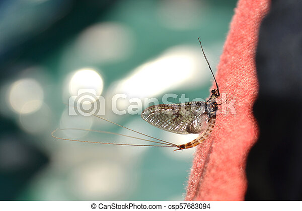 reposer, printemps, -, mayfly, royaume-uni, temps - csp57683094