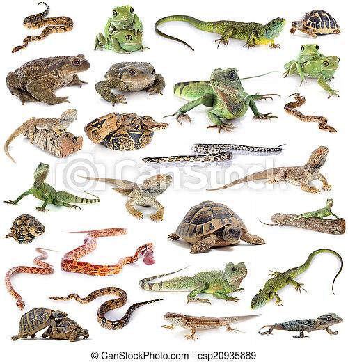 reptile and amphibian - csp20935889