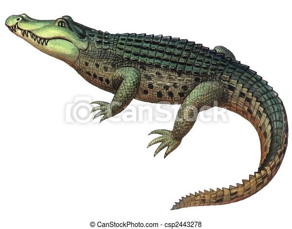 Reptile Crocodile  - csp2443278