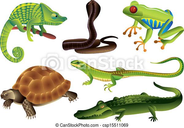 reptiles and amphibians set reptiles and amphibians photo realistic rh canstockphoto com Alligator Clip Art Alligator Clip Art