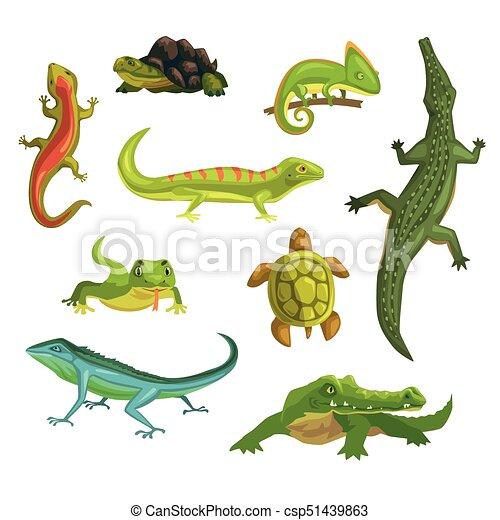 reptiles clipart - Jaxstorm.realverse.us