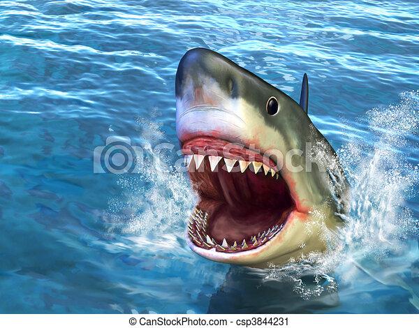 requin, attaque - csp3844231