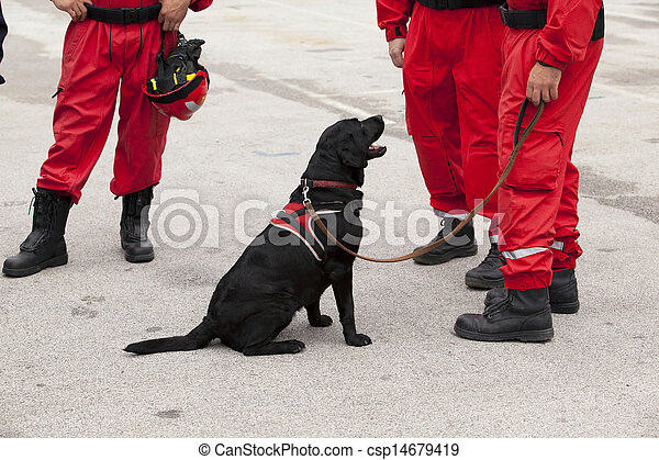rescue dog - csp14679419